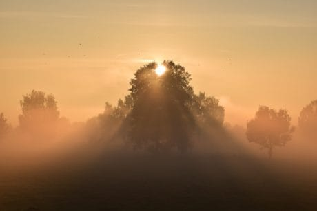 Backlit, nevel, silhouet, hemel, zon, landschap, mist, dawn