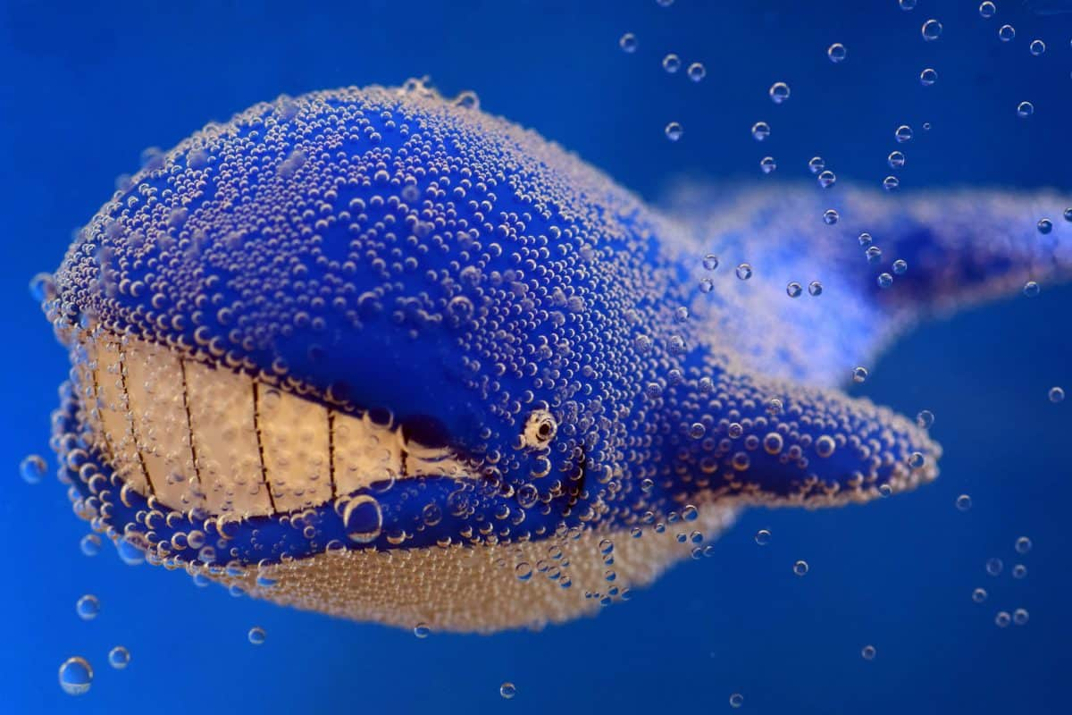 toy, whale, underwater, macro, detail, object, bubble, wet, water