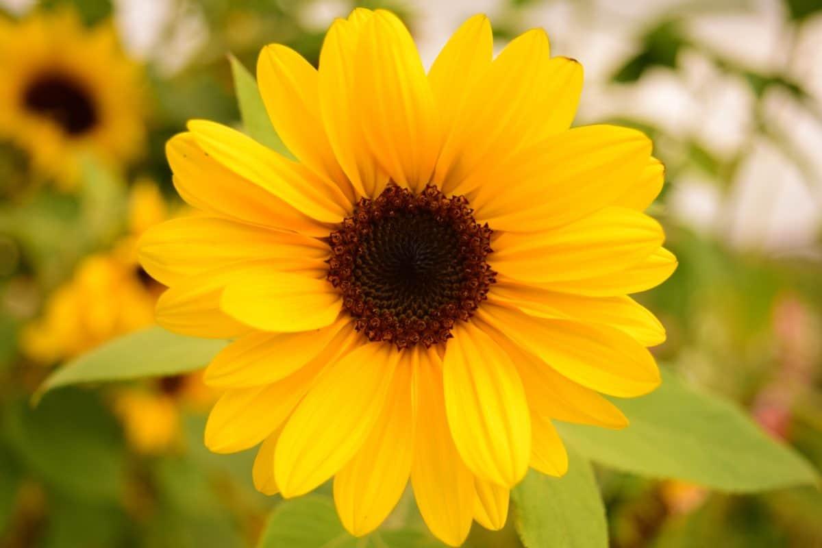 flores silvestres, flores, pétalos, planta, verano, jardín, flor