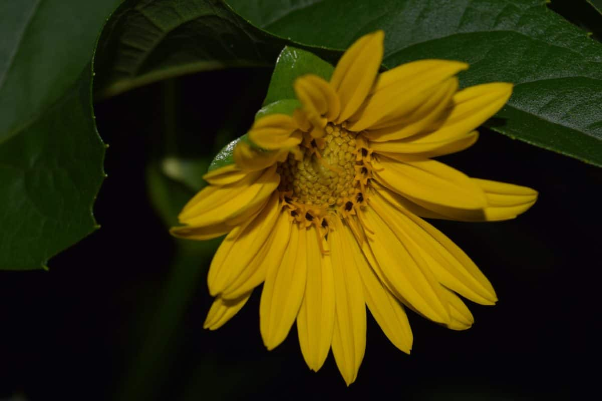 macro, sombra, flor, planta, hierba, Pétalo, verano, oscuridad, jardín