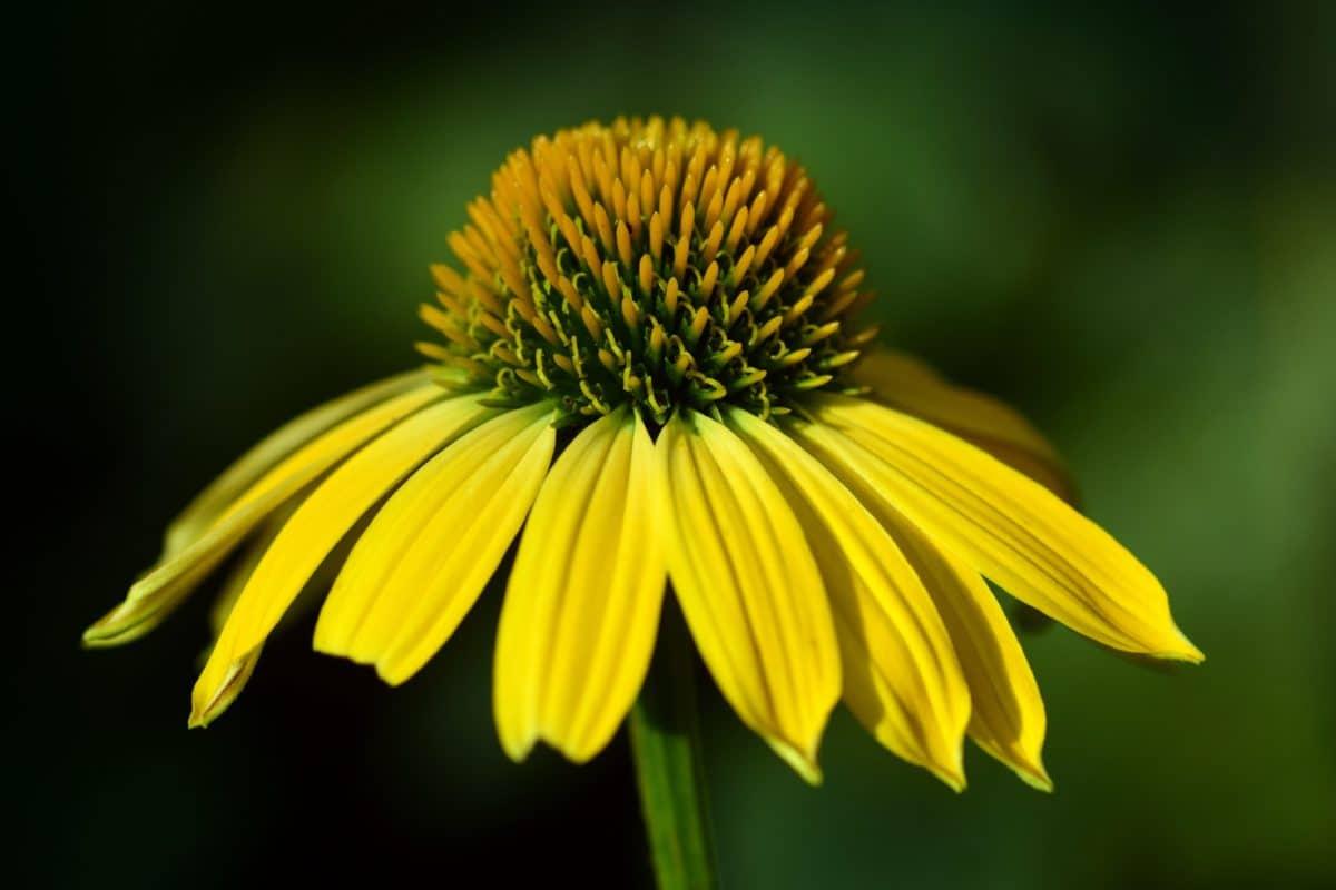 plante, fleur, macro, pistil, lumière du jour, pétale, jaune, pollen