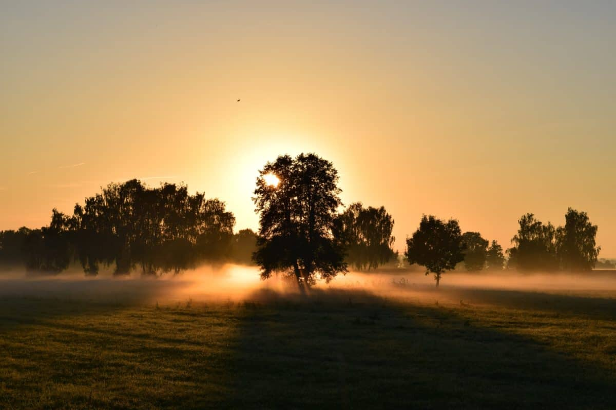 sunset, tree, mist, summer, field, silhouette, Sun, sky