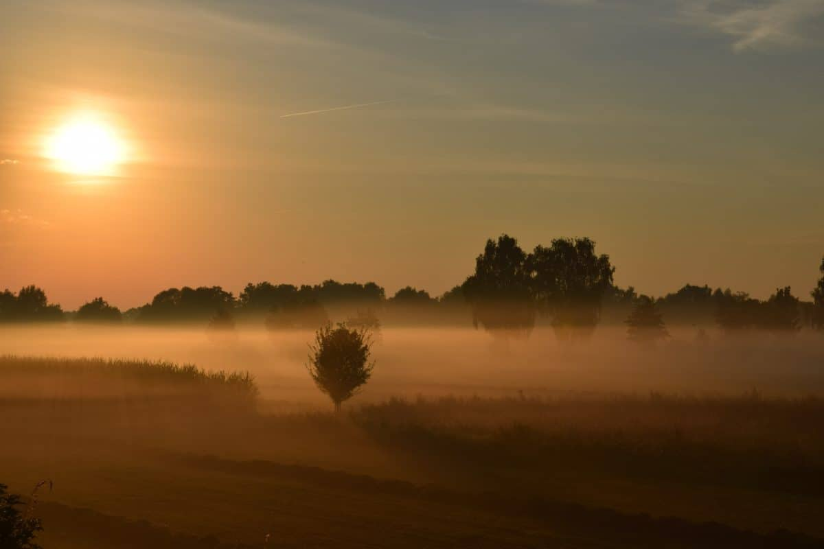 ciel, coucher de soleil, soleil, silhouette, paysage, brouillard, nuage, ombre, lever du soleil, arbre