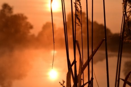 sunset, silhouette, lake, fog, mist, sky, reed grass, sun