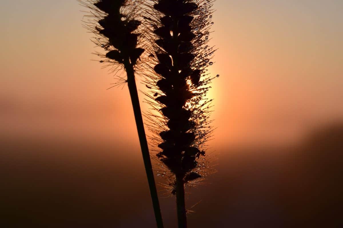 ombra, nebbia, alba, all'aperto, sagoma, sole, cielo, natura, paesaggio, tramonto