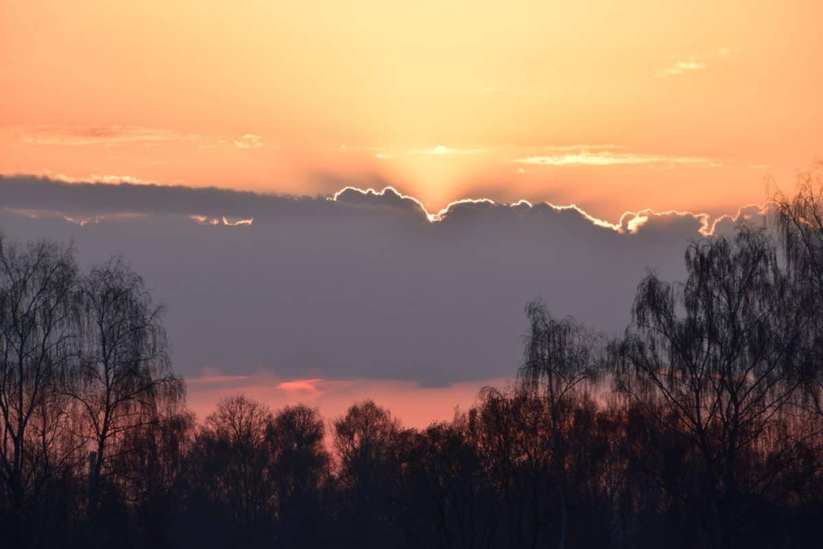 Silueta, stín, slunce, obloha, západ slunce, krajina, strom, venkovní