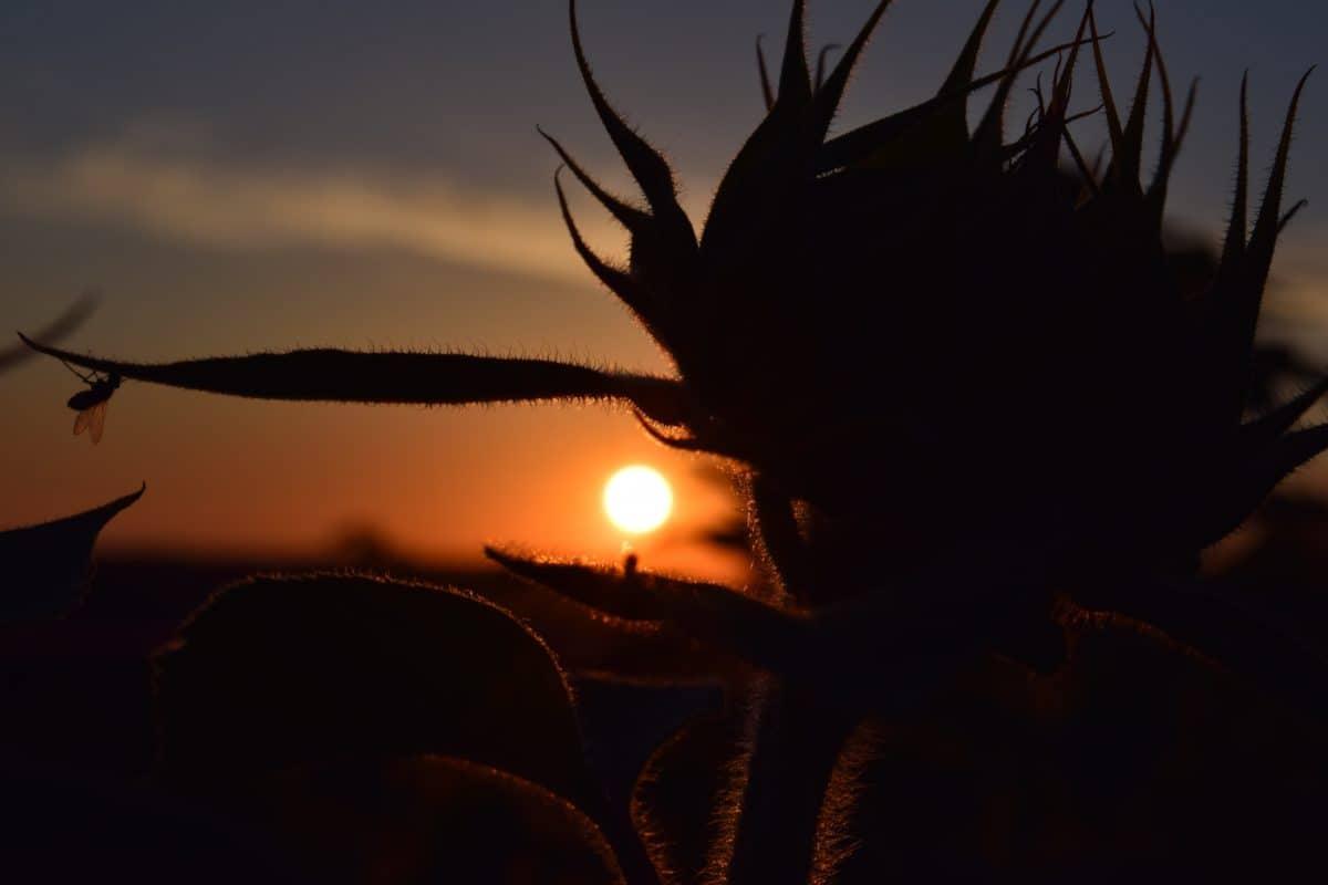 shadow, sun, sunset, sky, fog, sunrise, outdoor, silhouette, nature, landscape