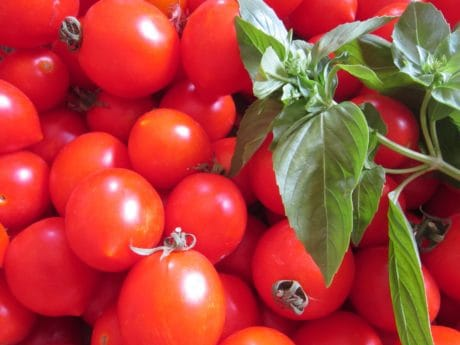 tomato, basil, green leaf, vegetable, herb, food, plant, organic, diet, vitamin