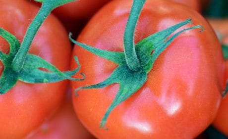 tomato, vegetable, food, fruit, macro, red, green leaf