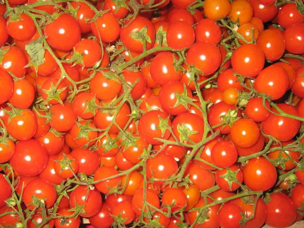 rosso, pomodoro, verdura, deliziosa, dieta, cibo macro