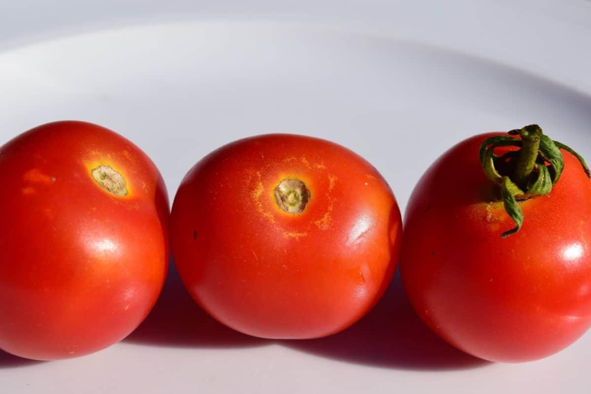 pomodoro, verdura, cibo, rosso, vitamina, vegetariano, erba