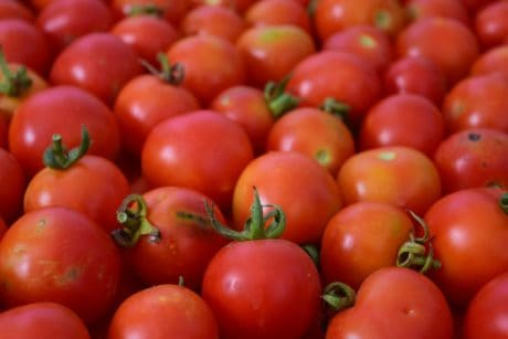 tomato, vegetable, herb, food, plant, vitamin, red, vegetarian, agriculture
