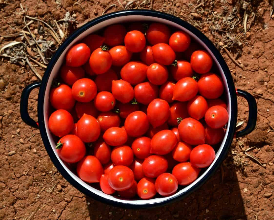 tomato, vegetable, food, diet, nutrition, herb, berry