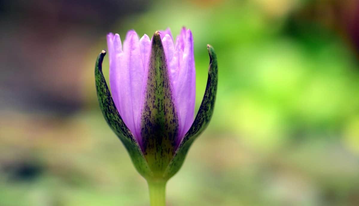 Blume, grünes Blatt, Sommer, Natur, Pflanze, Blüte, Blüte