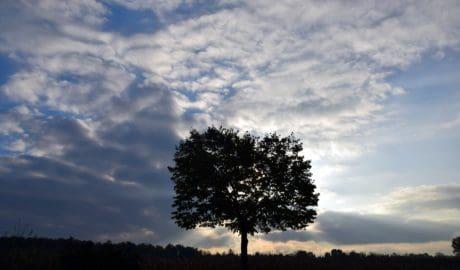 paesaggio, albero, natura, crepuscolo, tramonto, cielo, all'aperto