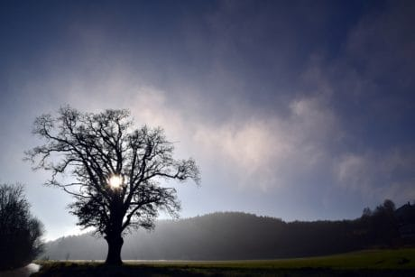 tree, sky, dawn, sunset, sun, nature, landscape, atmosphere