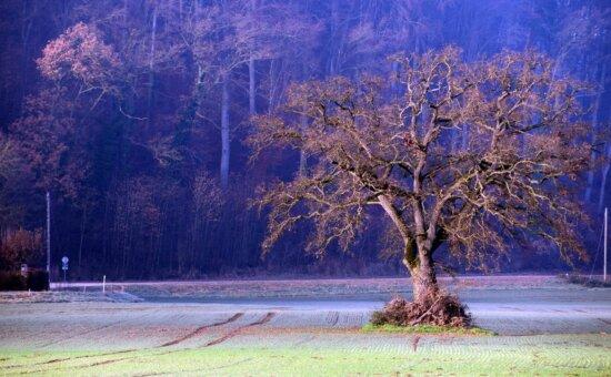 tree, landscape, wood, dawn, winter, nature, autumn