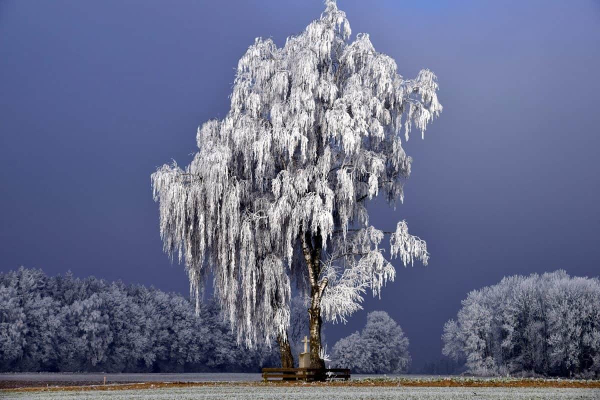 wood, winter, snow, nature, landscape, tree, forest, blue sky