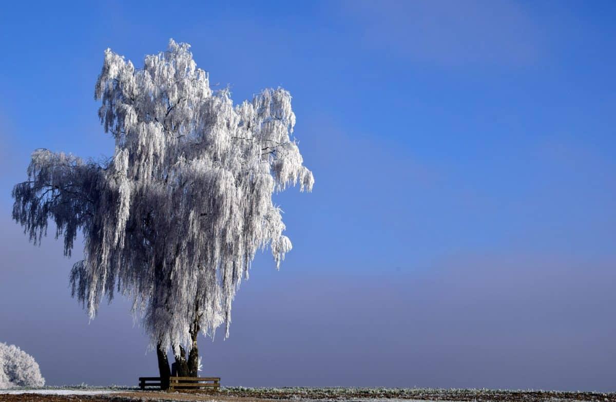 naturaleza, paisaje, cielo azul, agua, árbol, sauce, nieve, invierno