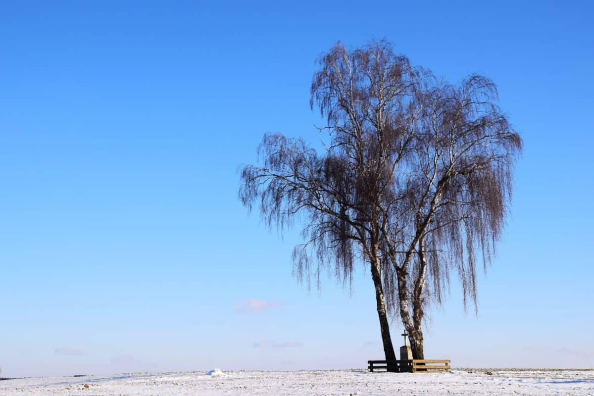 cielo azul, luz, naturaleza al aire libre, paisaje, nieve