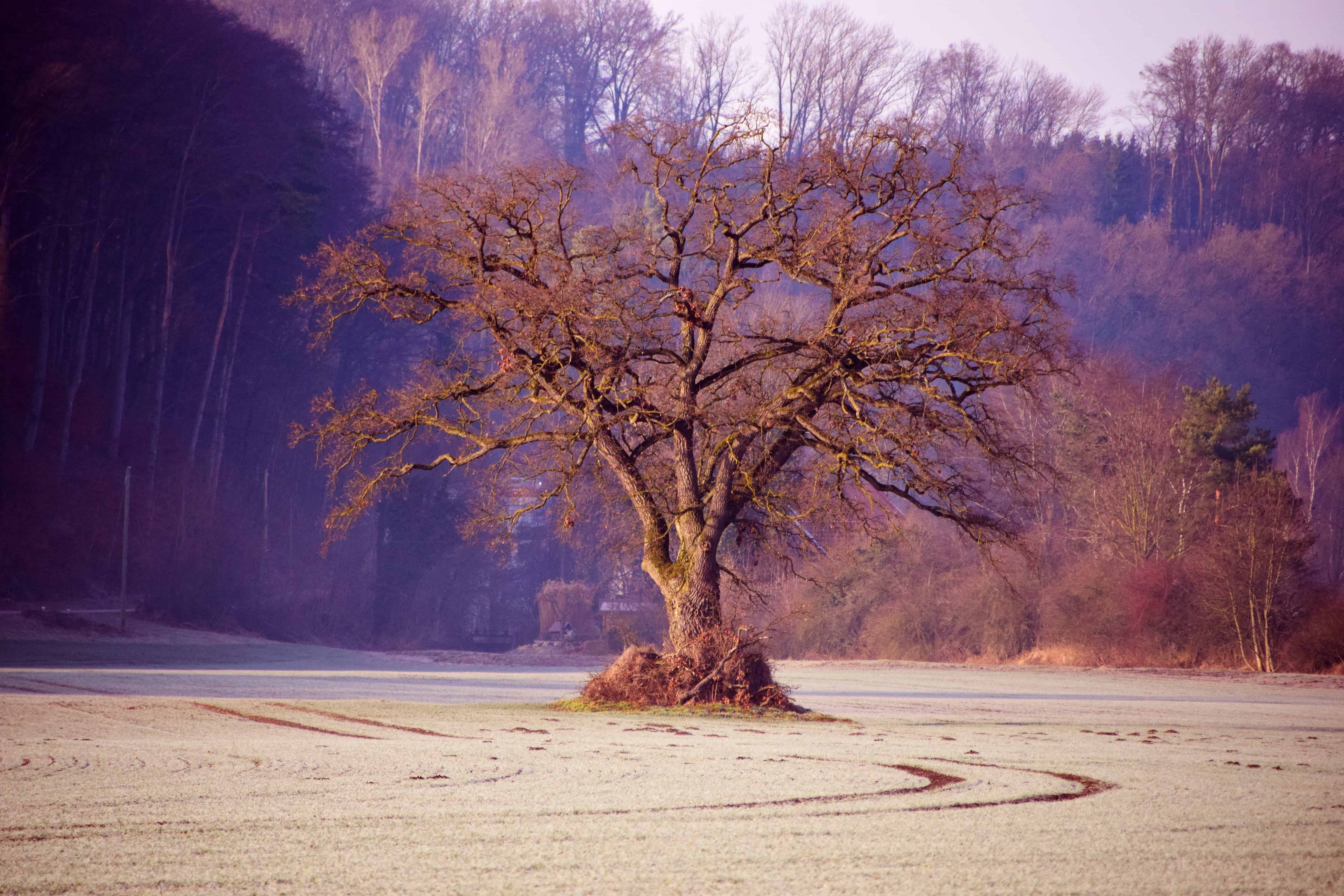 Free Picture Landscape Dawn Wood Tree Fog Sky Outdoor
