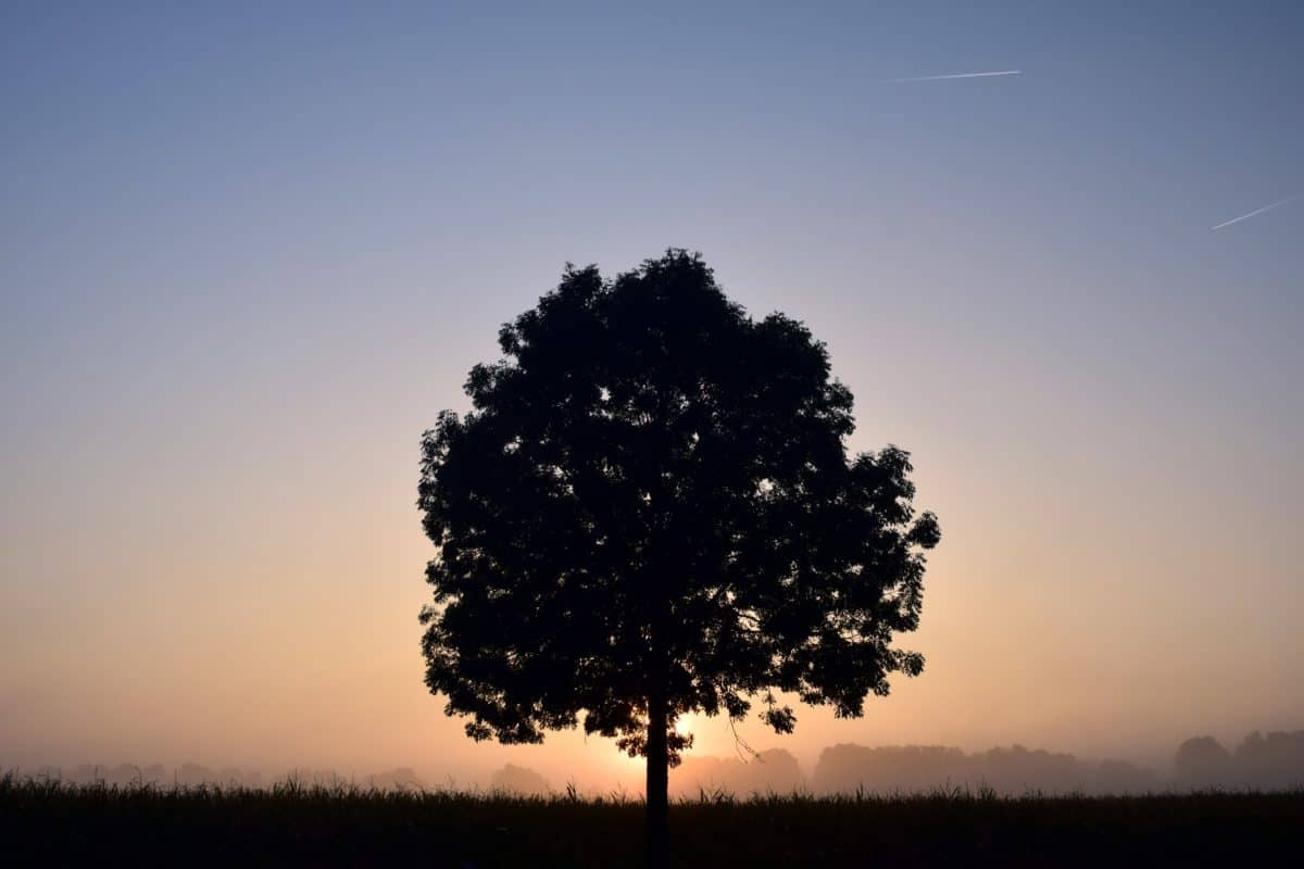 shadow, silhouette, sun, tree, nature, sky, dawn, landscape, sunset, outdoor