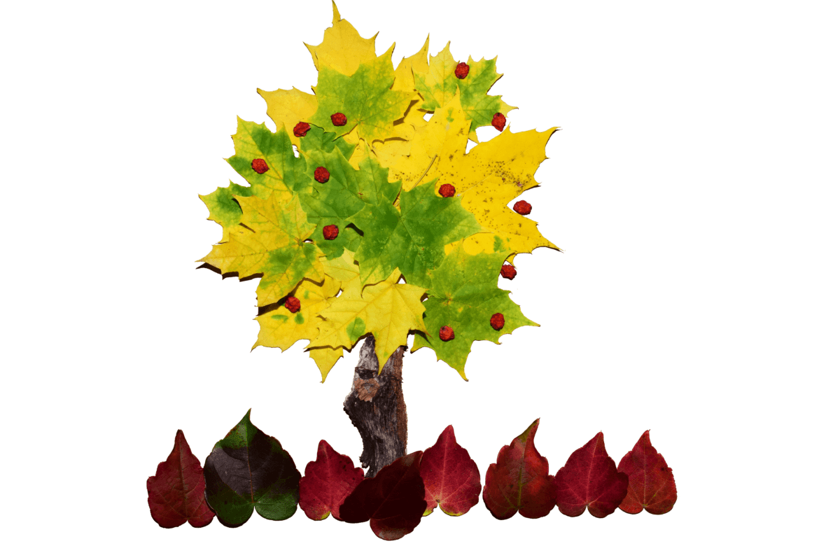 fotomontaggio, arte, design, foglia, natura, albero, autunno, pianta