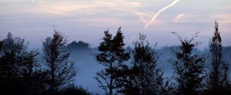 mist, zonsopgang, natuur, lucht, landschap, boom, bos, zon, buiten