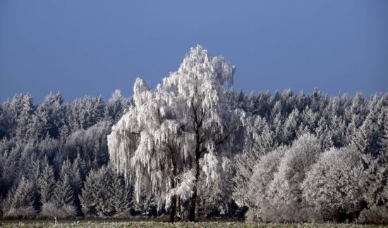 tree, snow, landscape, winter, wood, forest, mountain, sky