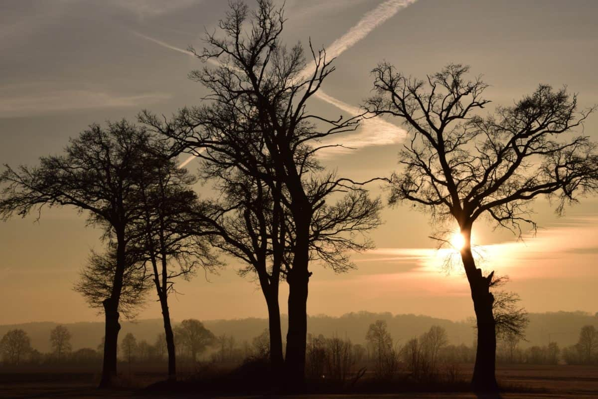 nature, arbre, brouillard, aube, brouillard, paysage, soleil, coucher de soleil, équipement