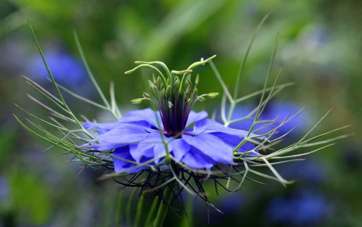 Flora, Natur, Wildblumen, Kraut, Pflanze, Blüte