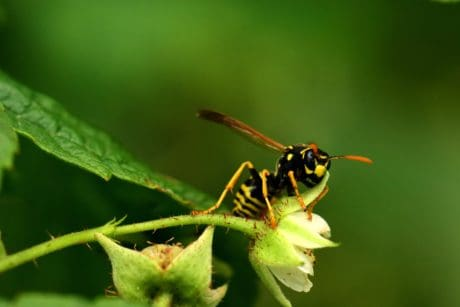 leaf, animal, nature, wasp, insect, invertebrate, wildlife
