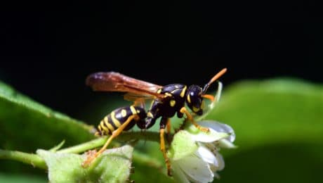 insect, invertebrate, animal, wildlife, nature, wasp, macro