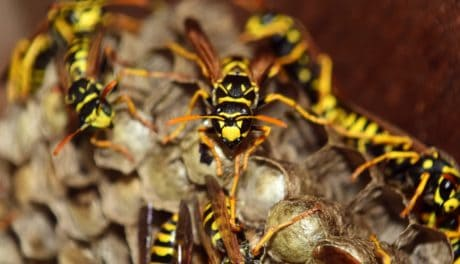 nature, nest, wasp, insect, arthropod, invertebrate