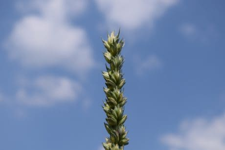 summer, nature, grass, blue sky, plant, outdoor