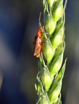 beetle, summer, insect, food, nature, arthropod, plant