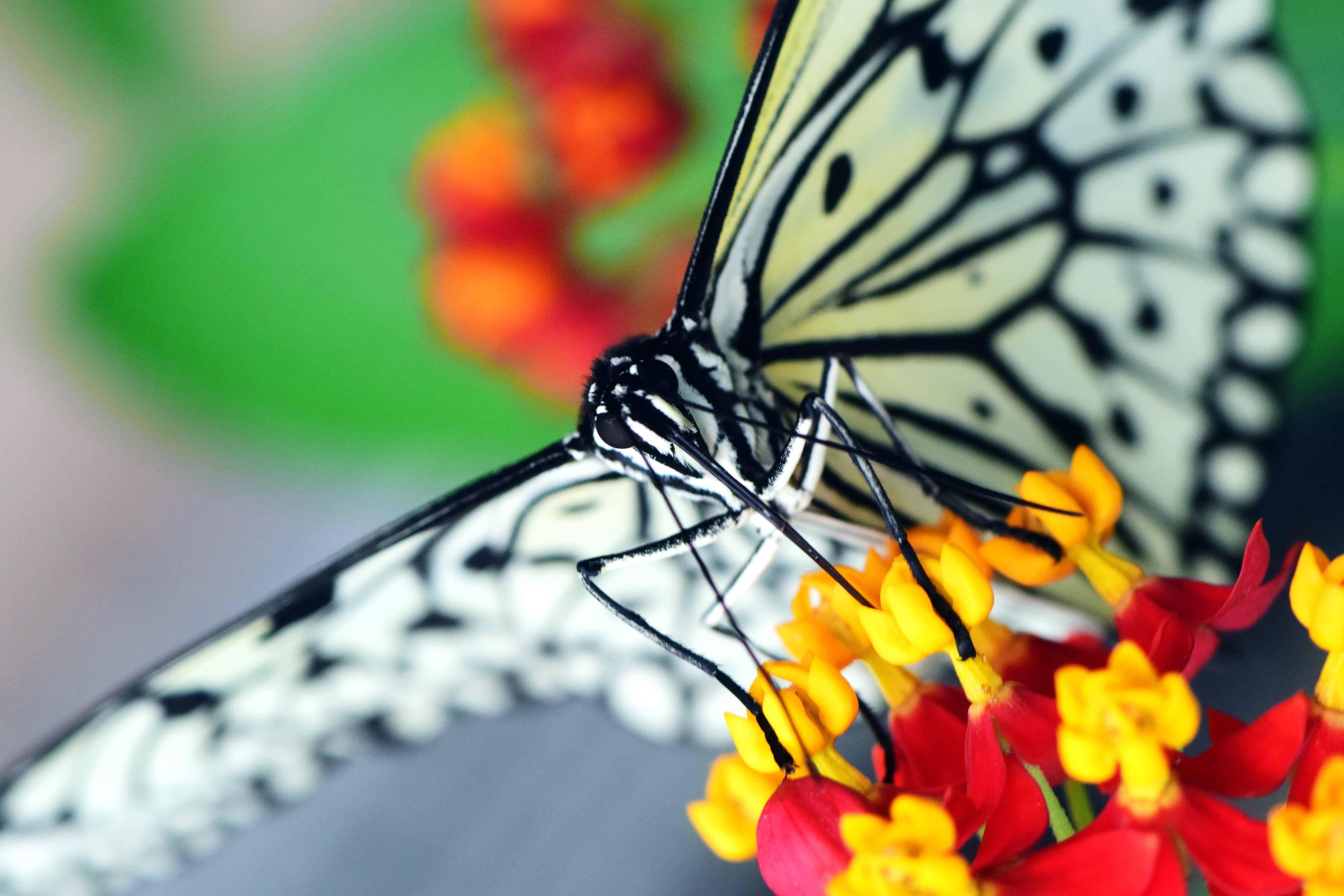 Image libre nature color animaux fleurs t insecte - Image papillon et fleur ...