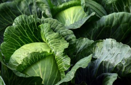 green leaf, nature, vegetable, cabbage, flora, herb, plant, green
