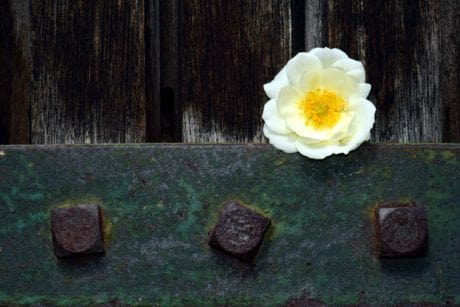 iron, metal, flower, steel, plant, wood, still life
