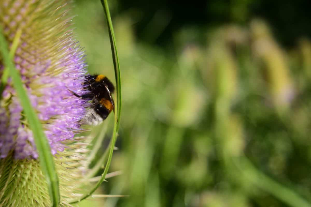 flora, bumblebee, flower, summer, insect, nature, herb, plant, butterfly