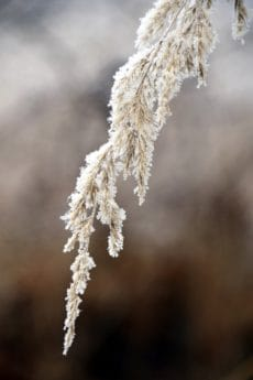 frost, nature, flora, winter, tree, plant, grass