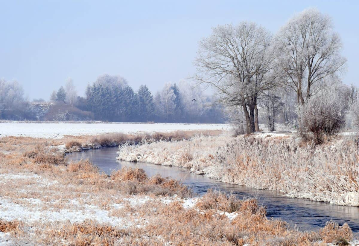 landscape, cold, frost, winter, tree, nature, snow, water
