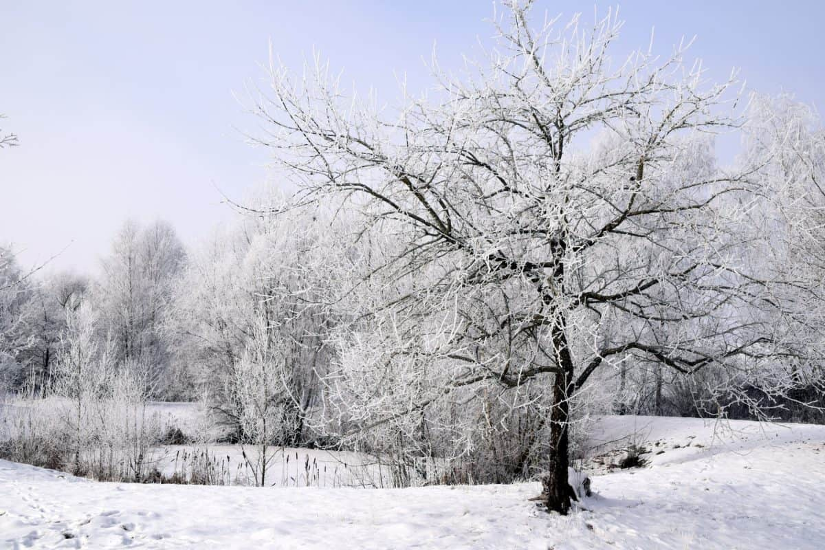 ice, landscape, winter, tree, frost, wood, snow, frozen, cold