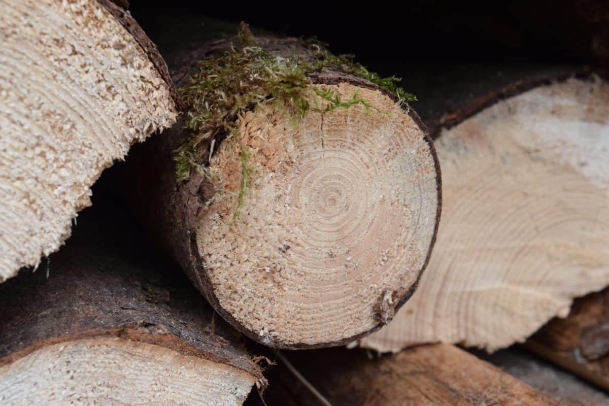 bois, mousse, plante, forêt, nature