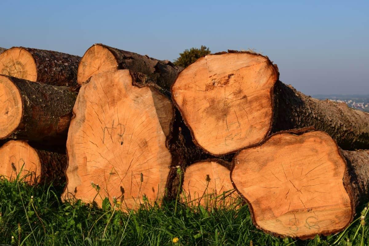 legna da ardere, bosco, erba, natura, pianta, cielo, legno