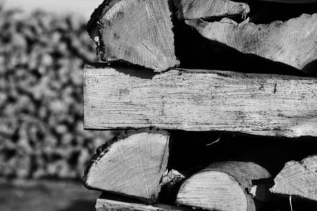 firewood, monochrome, wood, nature, plant, outdoor