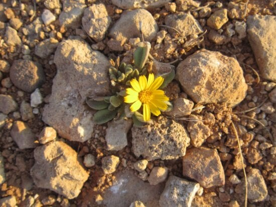 nature, plant, herb, flower, outdoor, stone