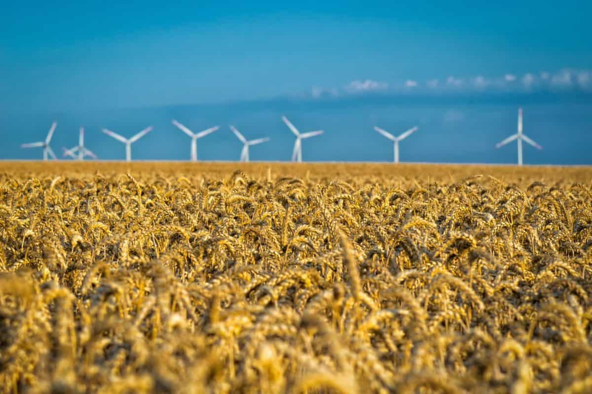 naturaleza, agricultura, viento, cielo, campo, cereal, paisaje
