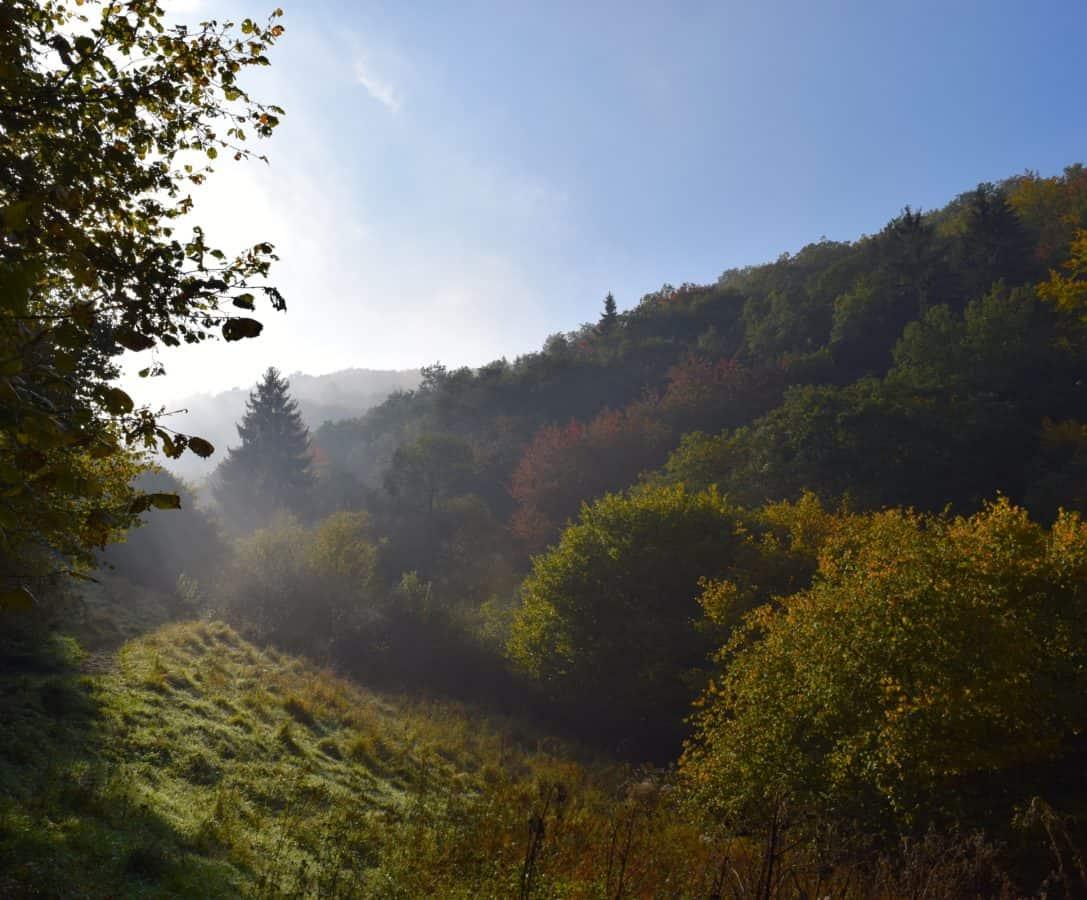 fog, mountain, nature, landscape, dawn, mist, wood, tree