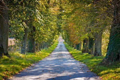 tree, road, nature, landscape, wood, leaf, path, plant, forest